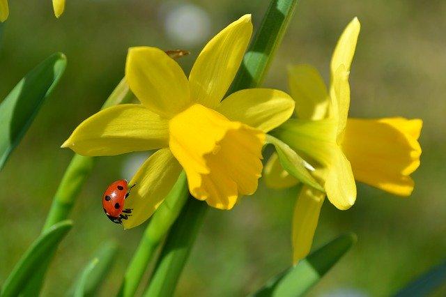 Njut av våren med en vårvisa om sol, liv, hopp och kreativ kraft!